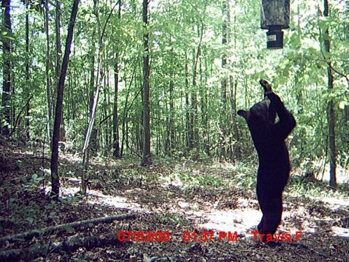 13-trail-cam-animals-funny-when-humans-arent-around