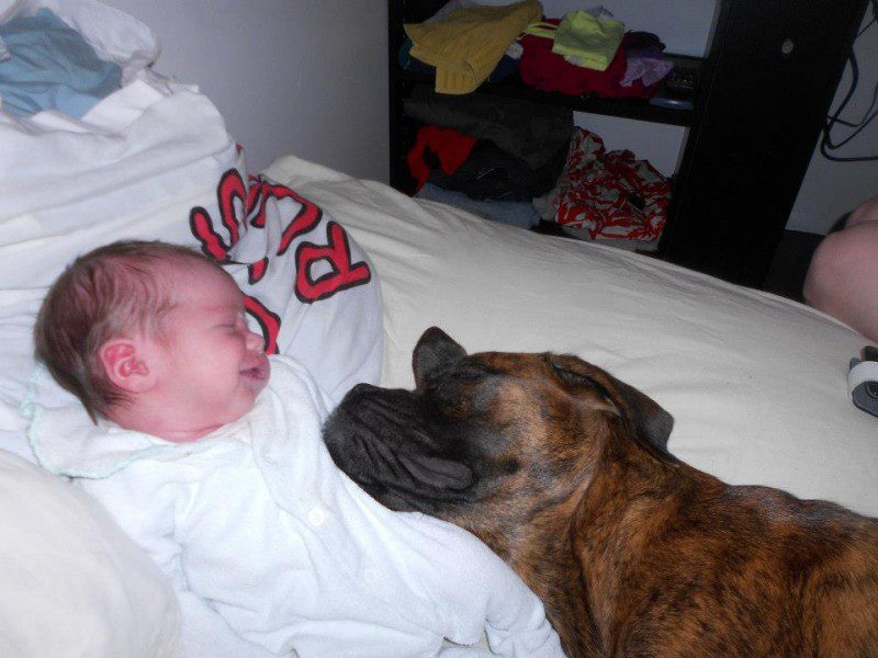 14-dogs-with-babies