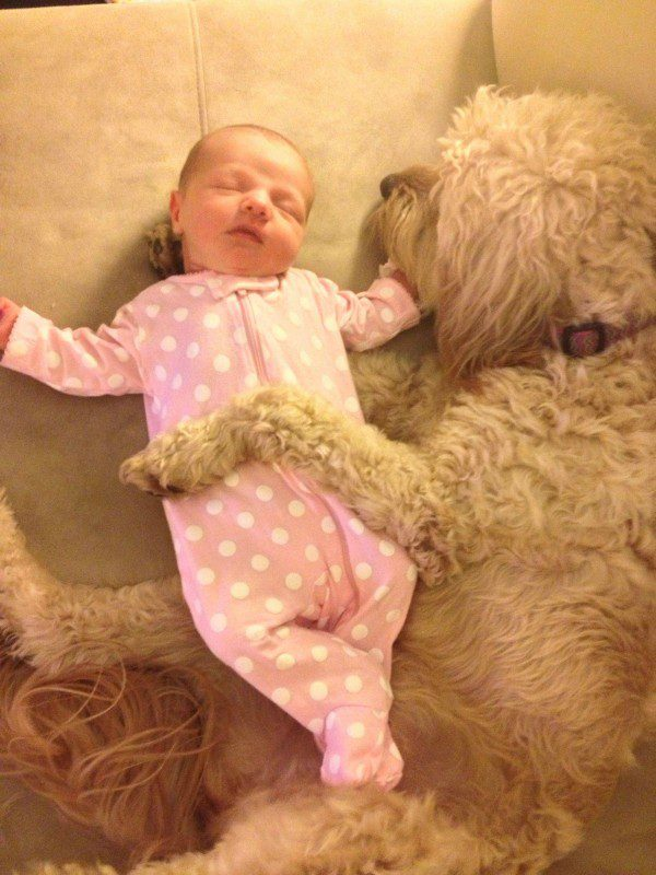 15-dogs-with-babies