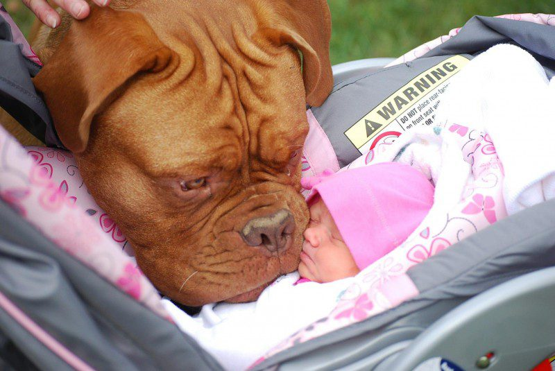 17-dogs-with-babies