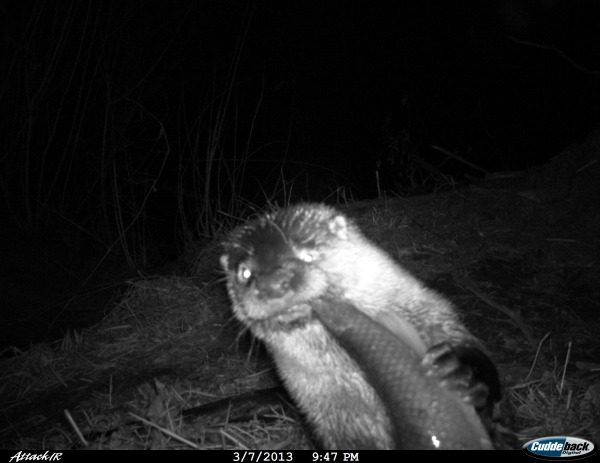 19-trail-cam-animals-funny-when-humans-arent-around