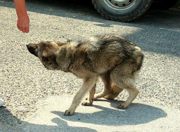 3.25.16-Rudozem-Street-Dog-Rescue-590x434