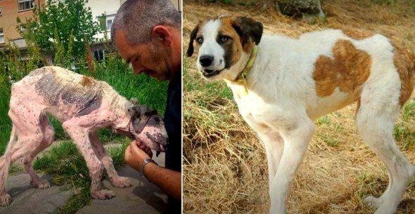 3.25.16-Rudozem-Street-Dog-Rescue-Khaleesi-590x305