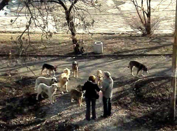 3.25.16-Rudozem-Street-Dog-Rescue2-590x437