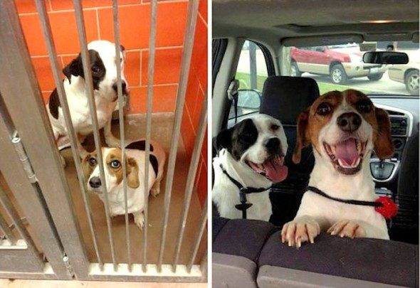3.26.16-Shelter-Dogs-Before-and-After25-590x405