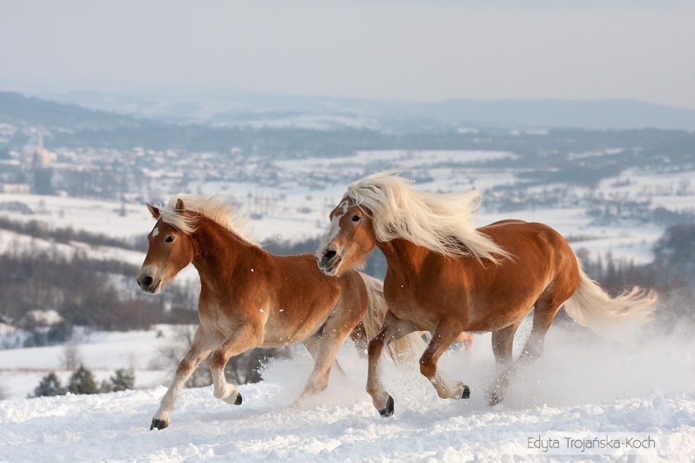 Beautifully Magnificent Horses