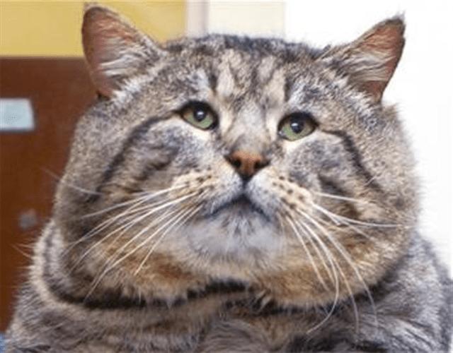 Fat-cat-Small