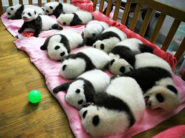 Panda daycare centers