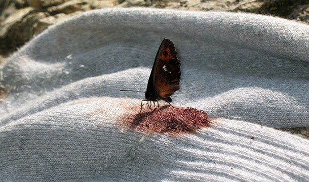 blood-drinking-butterflies