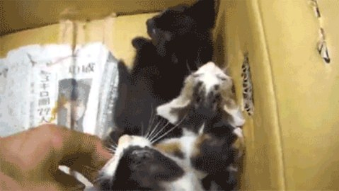 box of kitten