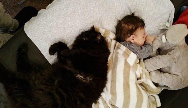 cat and newborn
