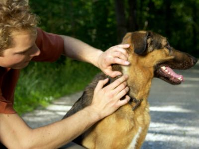 checking-for-ticks-9-Flea-and-Tick-Prevention-Tips-for-Dogs