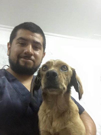 dog rescued from tar