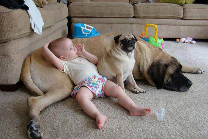 dogs cuddle babies