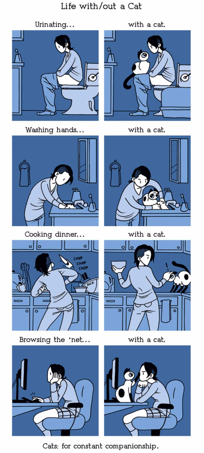 life with cat