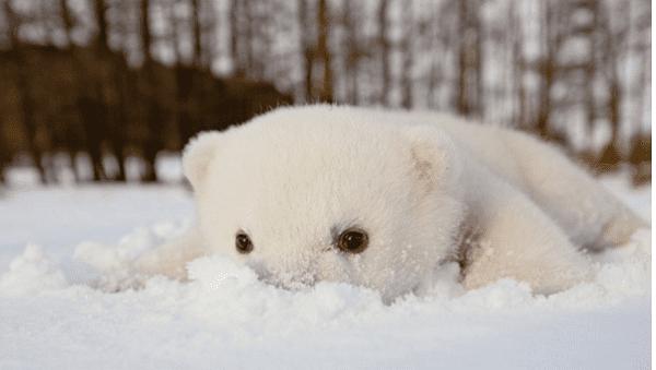Photos Of Adorable Baby Polar Bears Celebrating