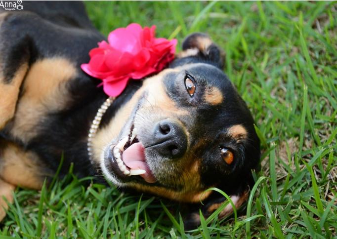 pregnant dog photo shoot