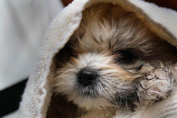 rinse-puppy-710x474