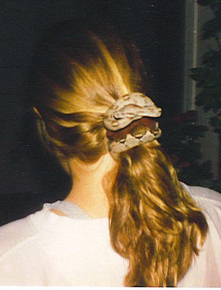snakes photos