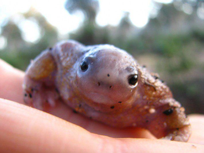 turtle-frog-12-710x533