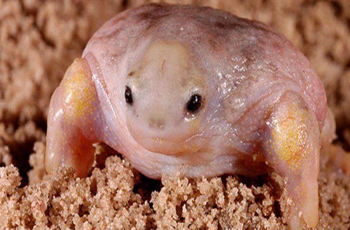 turtle-frog-13-710x467