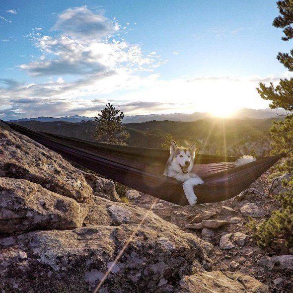 4.10.16-Loki-the-Wolfdogs-Adventures13-590x590