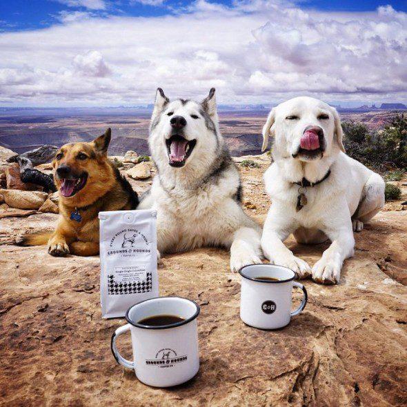 4.10.16-Loki-the-Wolfdogs-Adventures14-590x590 4