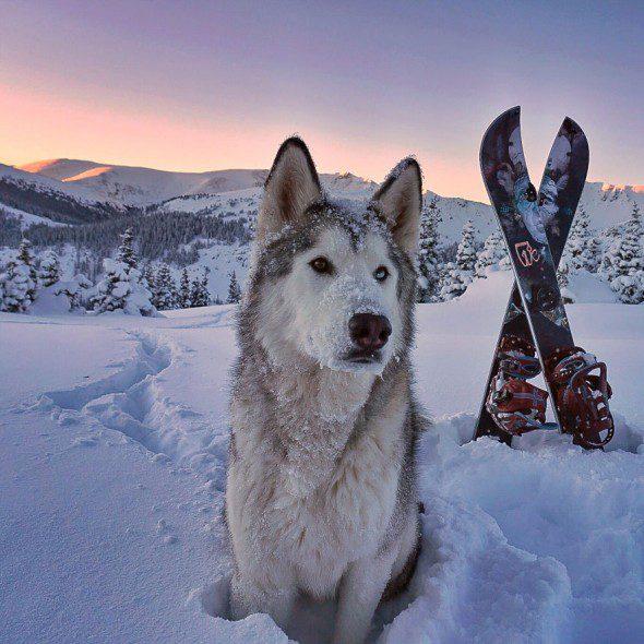 4.10.16-Loki-the-Wolfdogs-Adventures18-590x590