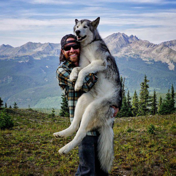 4.10.16-Loki-the-Wolfdogs-Adventures20-590x590 7