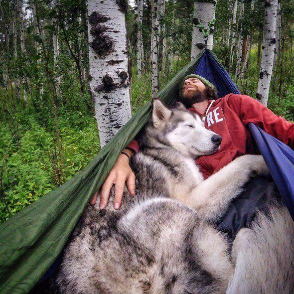 4.10.16-Loki-the-Wolfdogs-Adventures22-590x590