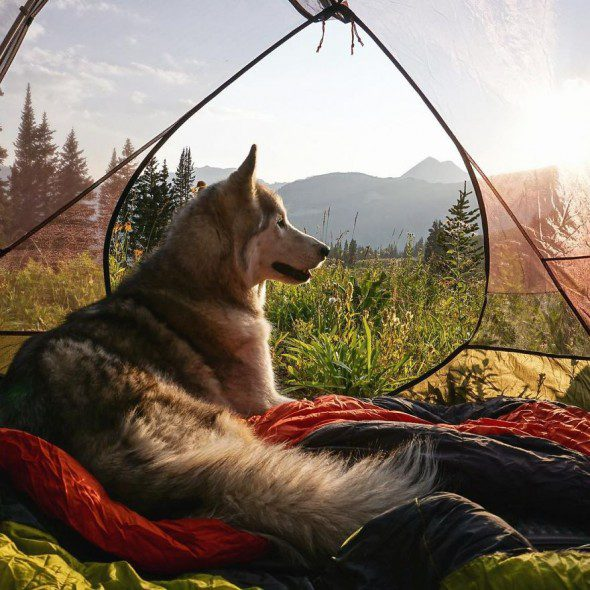 4.10.16-Loki-the-Wolfdogs-Adventures3-590x590