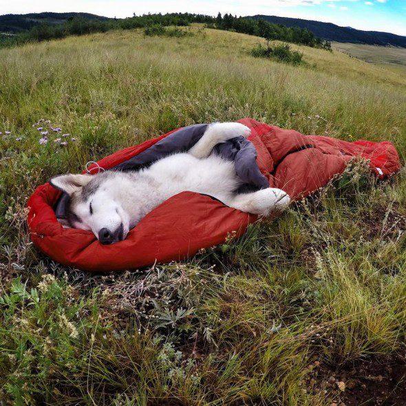 4.10.16-Loki-the-Wolfdogs-Adventures5-590x590
