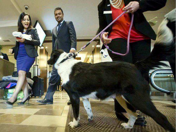 4.10.16-Ottawa-Hotel-Cum-Dog-Sanctuary3-590x443