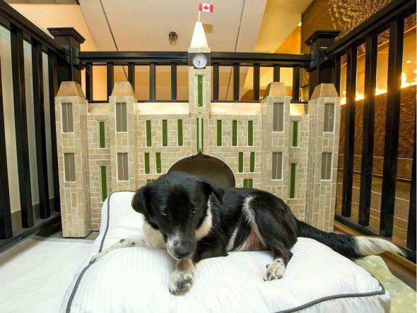 4.10.16-Ottawa-Hotel-Cum-Dog-Sanctuary4-590x443