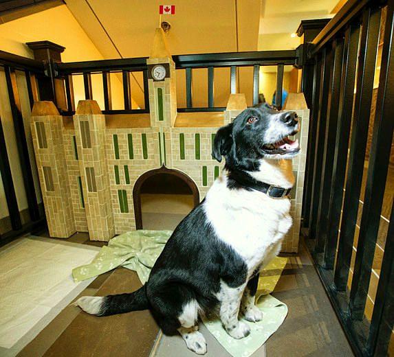 4.10.16-Ottawa-Hotel-Cum-Dog-Sanctuary51