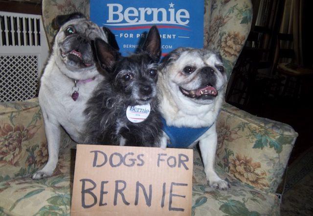 Dogs-For-Bernie-Sanders