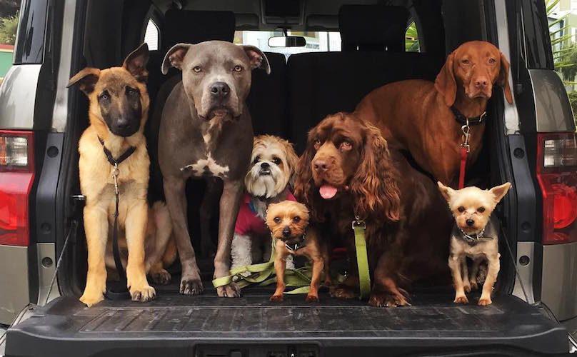 Dogswag-Instagram-Dogs