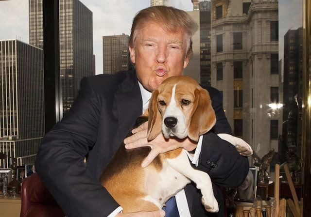 Donald-Trump-and-Beagle