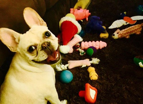 dog-toys-everywhere-e1436895260220-600x436