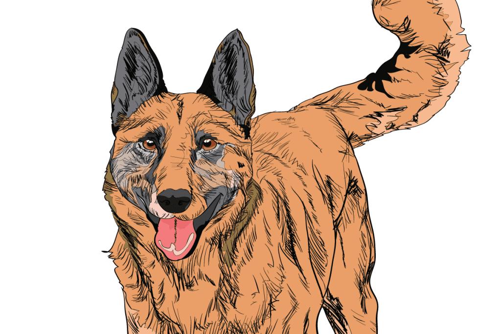 dog41-1024x683