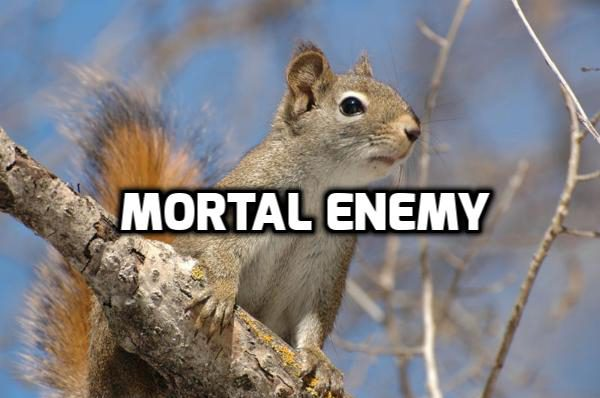squirrelmortalenemy