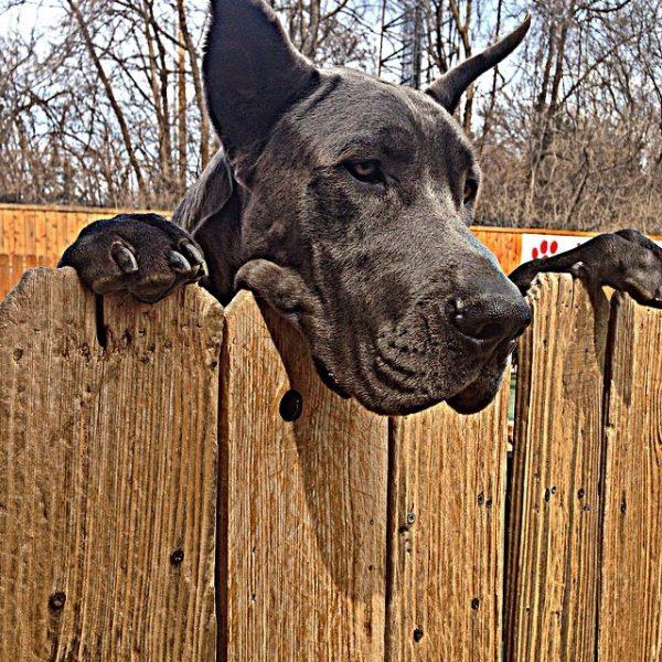 tall-dog-problems-14-600x600