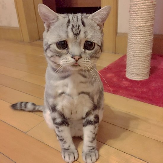 the saddest cat