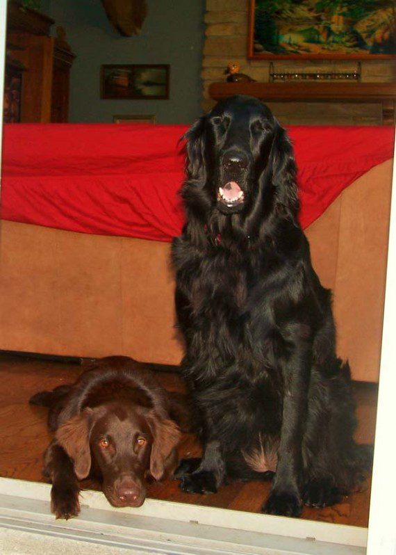 blind-dog-gets-new-friend-1