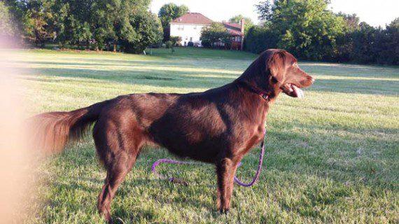 blind-dog-gets-new-friend-10