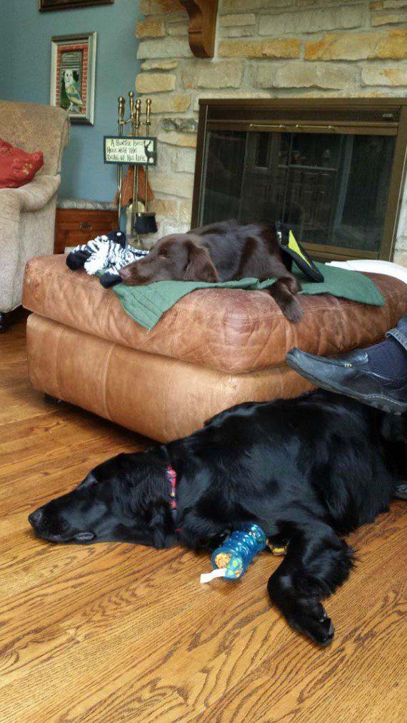 blind-dog-gets-new-friend-12