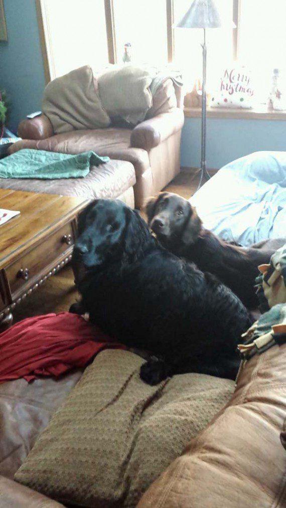 blind-dog-gets-new-friend-13
