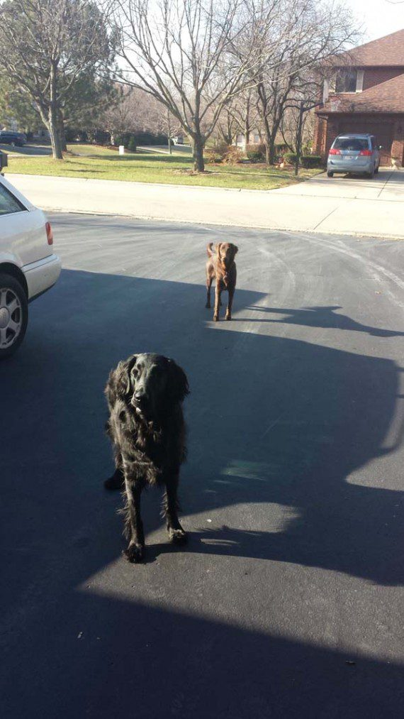 blind-dog-gets-new-friend-14