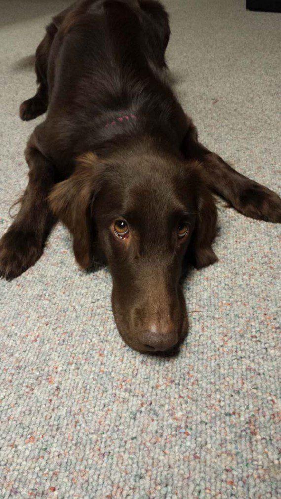 blind-dog-gets-new-friend-15