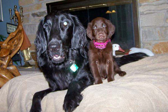 blind-dog-gets-new-friend-2